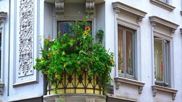 flores para balcones pequeños